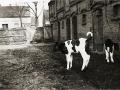 Auf dem Bauernhof der Familie Wollschläger um 1920