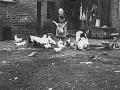 Bauernfrau Frieda Sieloff geborene Wollschläger