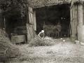 Frauen auf dem Bauernhof beim Korndreschen