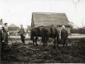 Familie Wollschläger beim Pflügen um 1920